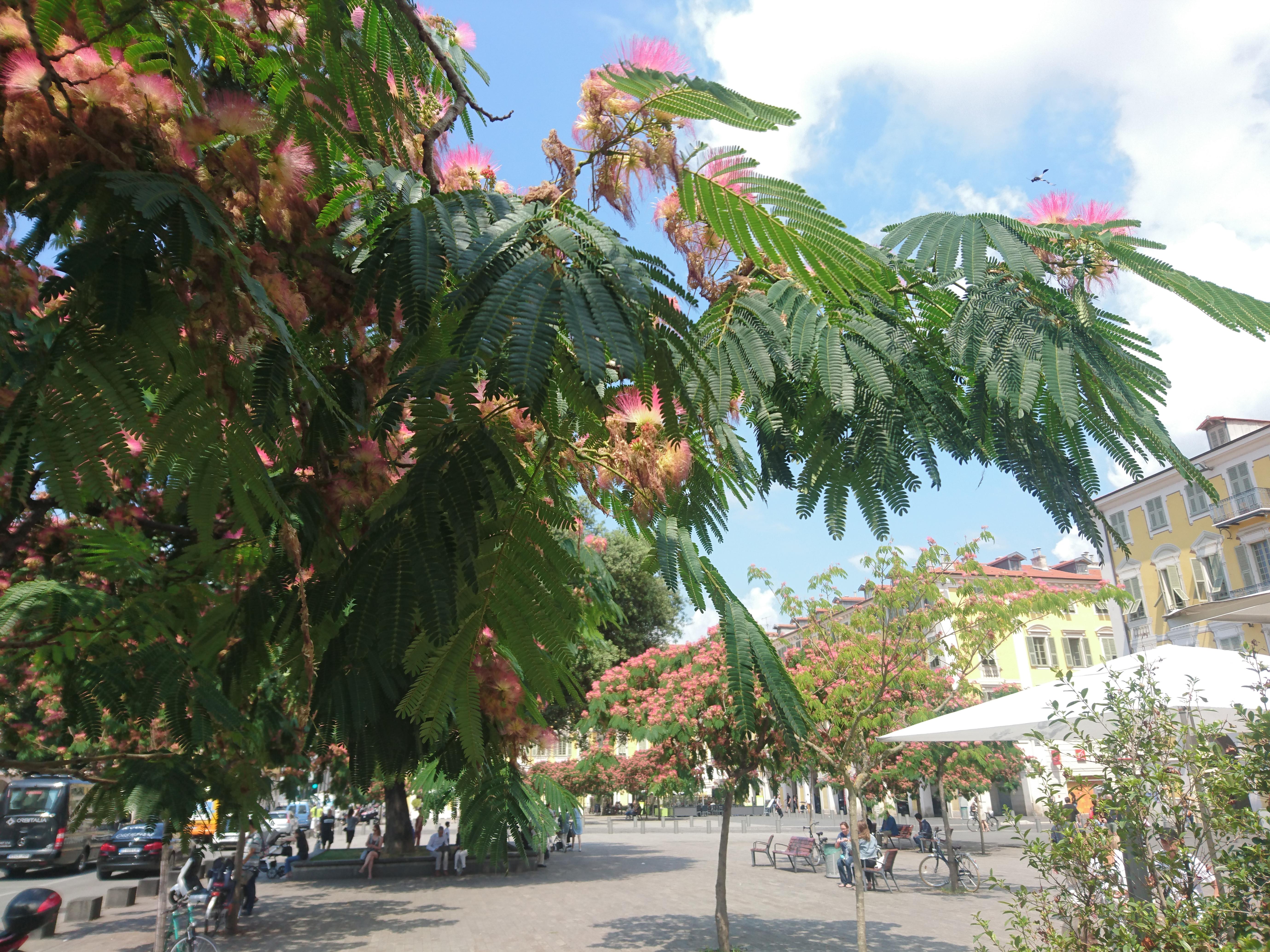 MÉTÉO Quel temps à Nice ce mercredi 27 juin ?