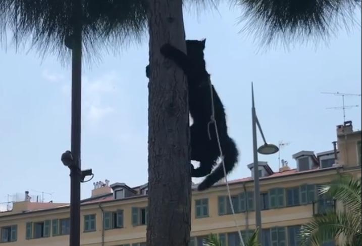 VIDÉO Le chat-panzé de Nice !