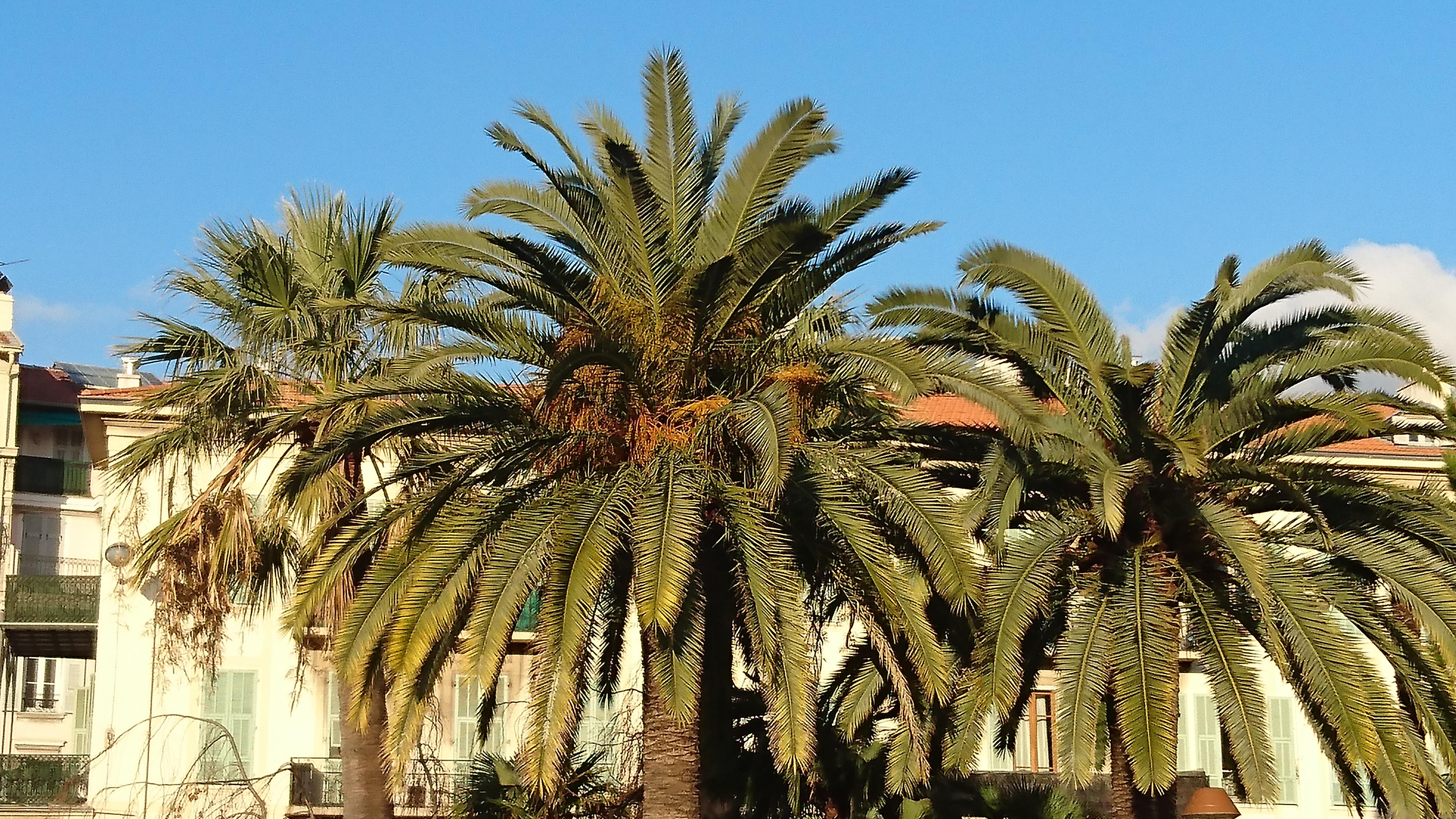 METEO Quel temps à Nice ce mardi 23 octobre ?